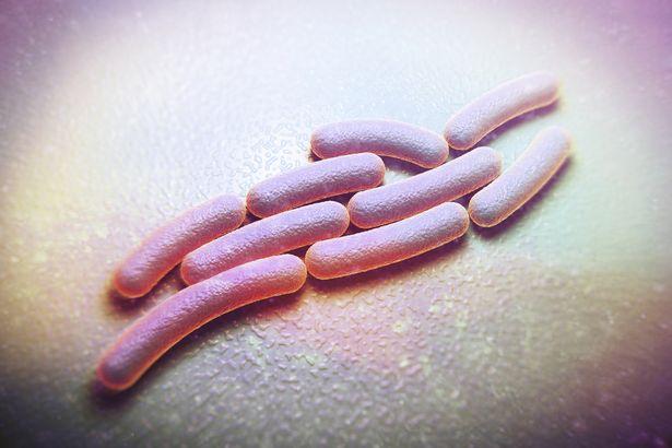 عدة، شيغيلا، سوني، بكتيريا