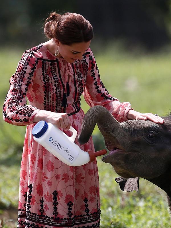 دوقة كامبريدج يغذي الفيل طفل في مركز للتأهيل الحياة البرية والمحافظة عليها