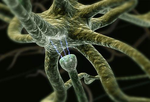 ربط الخلايا الإشارات في الجهاز العصبي المركزي
