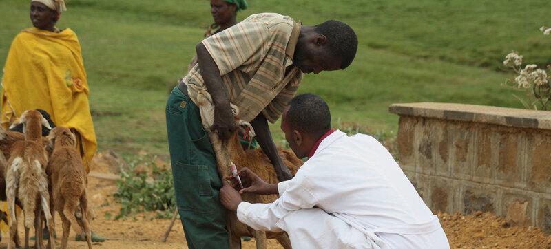 الحياة البرية والأوبئة والفيروسات COVID-19 والإيبولا والثروة الحيوانية والحيوانات والمزارع