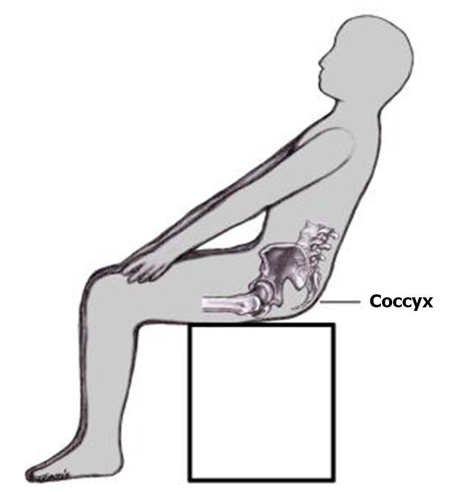 مخطط الجسم