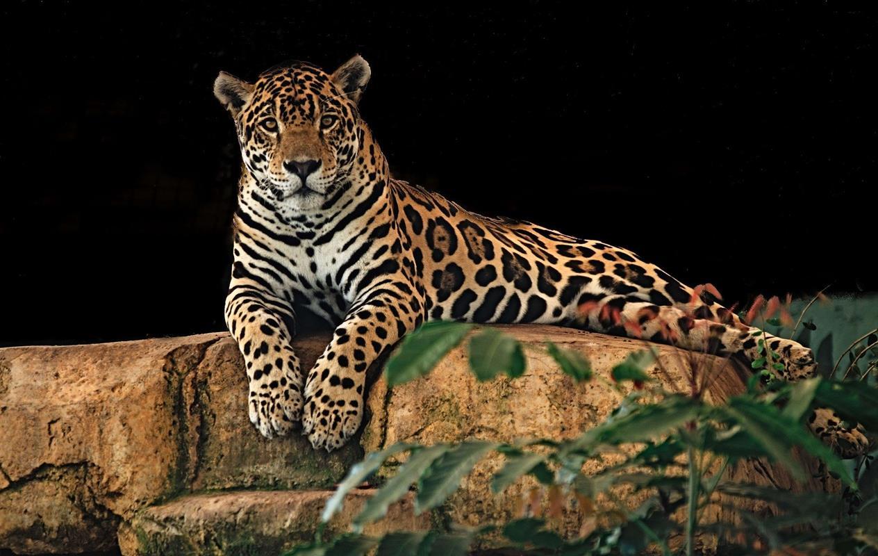 انهيار السياحة البيئية يهدد المجتمعات والحياة البرية