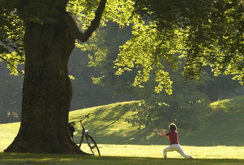 المرأة، العمل، اليوغا، أقل، الشجرة