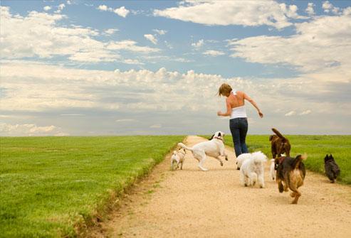امرأة وعدة كلاب تعمل على ممر المشاة