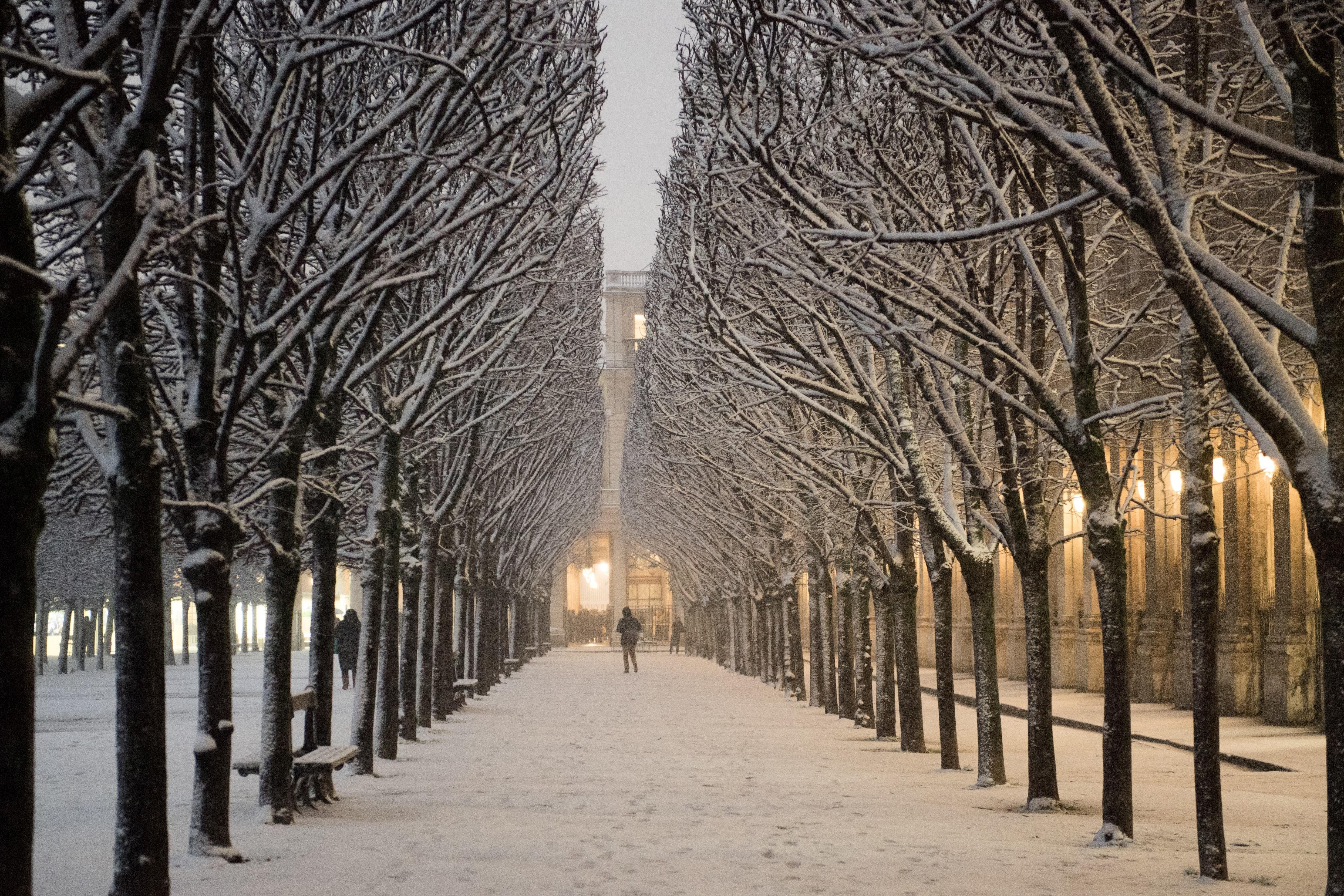 شخص يمشي في حدائق القصر الملكي (أف / جيرارد جوليان)