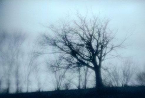 الأشجار التي لا أوراق لها في يوم شتاء كئيب